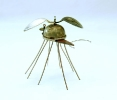 dicranomyia-ligula-argentum-silberne-loffelstechfliege