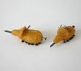 gemeine-wachsbohrkafer-bostrichidae-terebro-cera